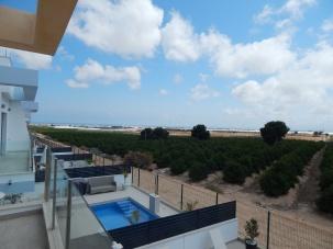 View over Orange groves